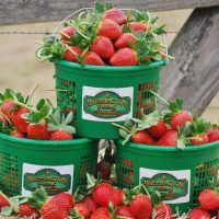 Blessington Farms Opening Weekend for Spring Strawberry Picking & Farm Funland!
