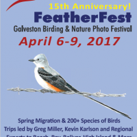 15th Annual FeatherFest Birding and Nature Photography Festival