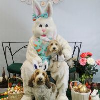6th Annual Doggie Pictures with the Easter Bunny