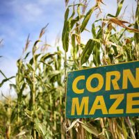 Froberg's Fifth Annual Corn Maze and Fall Festival (Weekends)