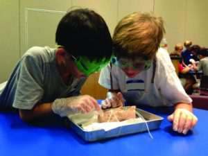 Summer Discovery Camps