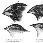 Darwin's Naturalist Journey aboard Beagle