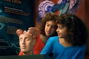 """""""BRAIN: The World Inside Your Head"""" presented by The Health Museum"""