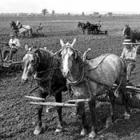 Life on the Frontier at Washington-on-the-Brazos: Beasts of Burden: Draft Animals at Work
