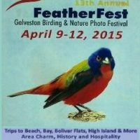 13th Annual FeatherFest Birding and Nature Photography Festival
