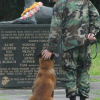 Operation: War Dogs Benefiting Mission K9 Rescue