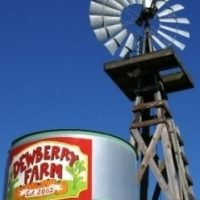 Visit Dewberry Farm (Corn Maze, Pumpkin Patch and Family Farm Fun - Weekends)