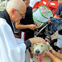 St. Francis Church Blessing of the Pets