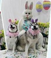 5th Annual Doggie Pictures with the Easter Bunny