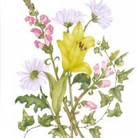 Drawing from the Garden