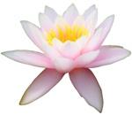 Sahaja Meditation - Houston (Tuesdays)