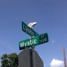 Mystic Lyon