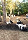Bear Branch Dog Park