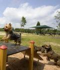 Bill Archer Park &  Dog Park (Bear Creek)