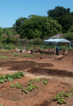 Last Organic Outpost - Emile Street Community Research Farm
